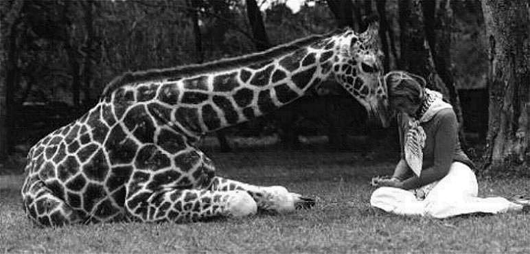 giraffewoman